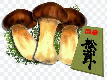 國產松茸蘑菇