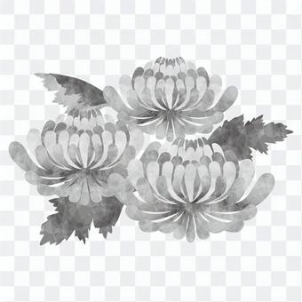 菊花/哀悼
