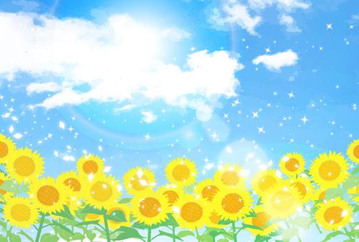 藍天和向日葵 11