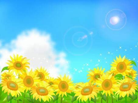 向日葵和夏天的天空