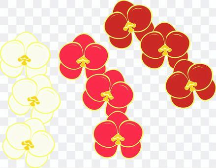 Hu Dilan Tricolor