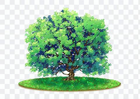 自然圖-綠樹