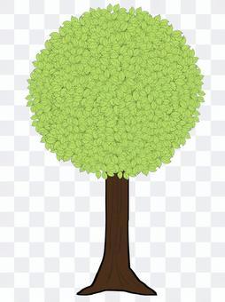 Street tree ③
