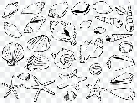 Illustration 001 Seashell
