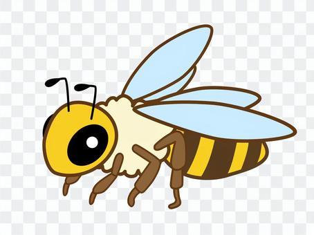 ミツバチ_13