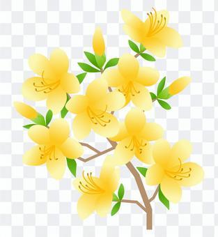 杜鵑花(黃色)