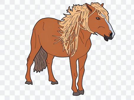 Horse (mane)