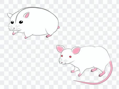 小鼠和倉鼠