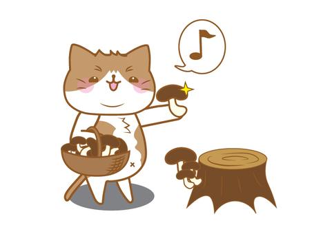 Chubby cat mushroom