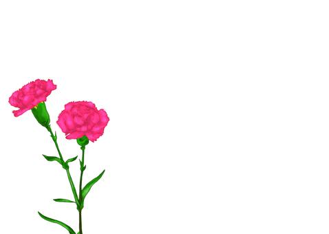 母親節康乃馨