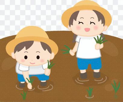 Children planting rice