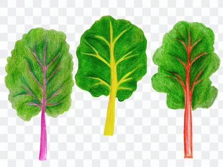 スイスチャード(色鉛筆画のイタリア野菜)