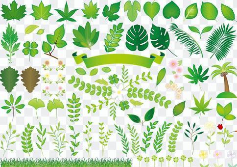 緑の葉っぱ集