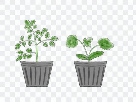 蔬菜幼苗01夏季蔬菜