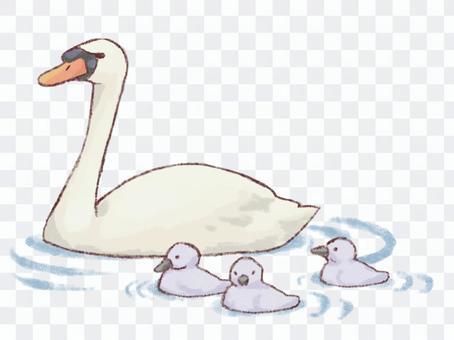 白蝴蝶父母和孩子