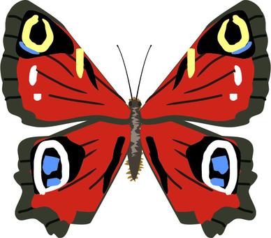 孔雀蝴蝶,Nymphalidae昆蟲