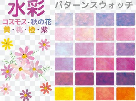 波斯菊水彩圖案秋花九月十月植物