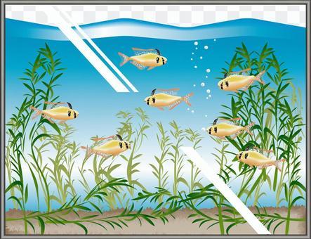 德國羔羊鑑賞魚魚繁殖水族館