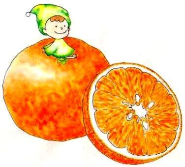 柑橘:塞米諾爾