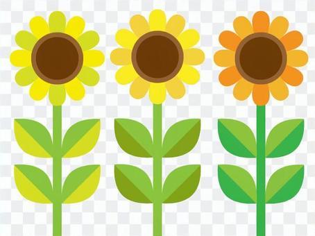 向日葵(帶葉子)