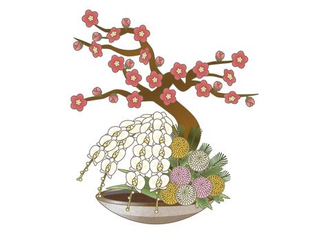 Plum orchid pine ping pong mum flower