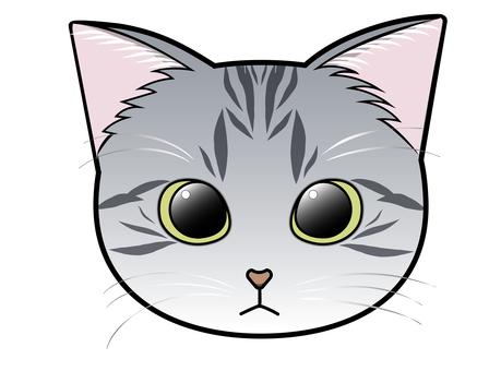 Front-facing cat face (Sabatra cat)