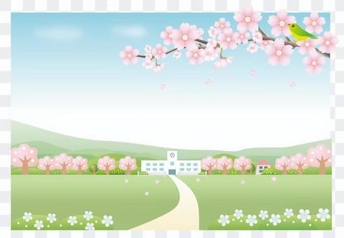 櫻花風景和學校背景