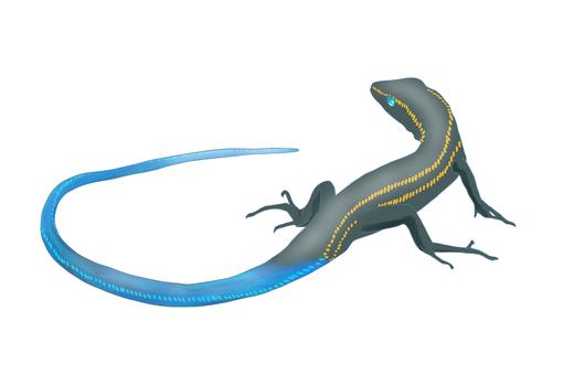 Japanese lizard