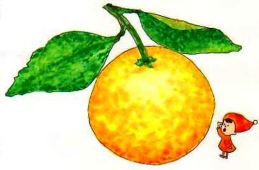 柑橘:清米