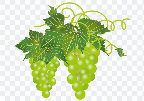美味的葡萄9