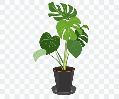 觀賞植物內部