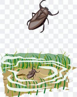 タガメ 昆虫 水辺 水中 水生昆虫