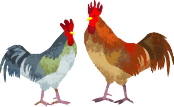 鶏 Watercolor 2 birds