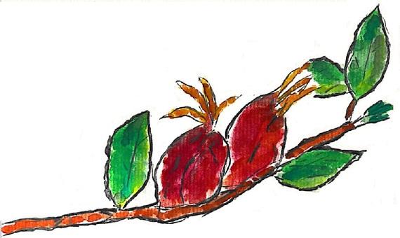 無果的水果