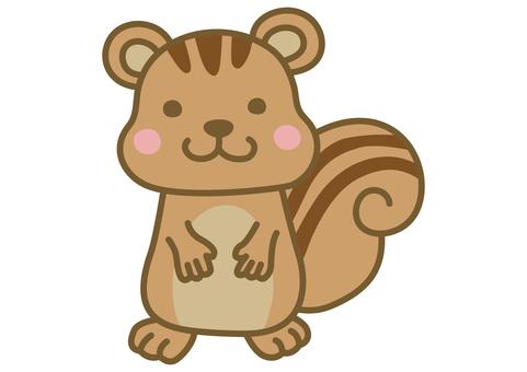 可愛的松鼠圖