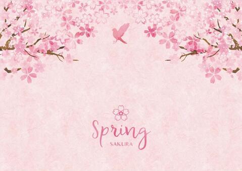 Spring background frame 028 Sakura watercolor paper