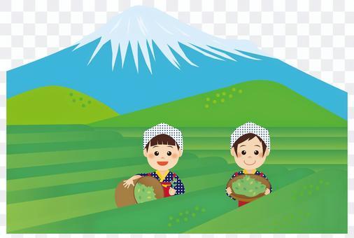 茶畑と茶娘01