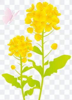 强奸的花朵