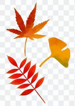 秋天的葉子和銀杏(水彩風格)
