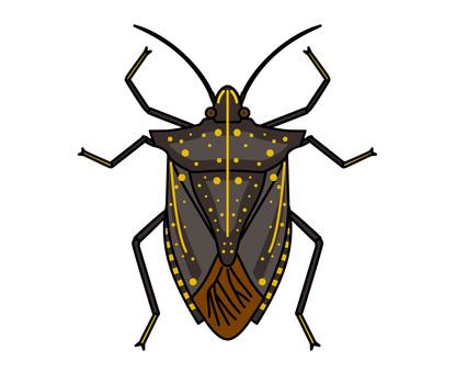Stink bug-black