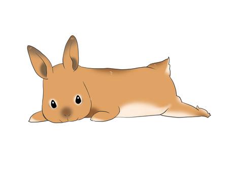Sleeping rabbit