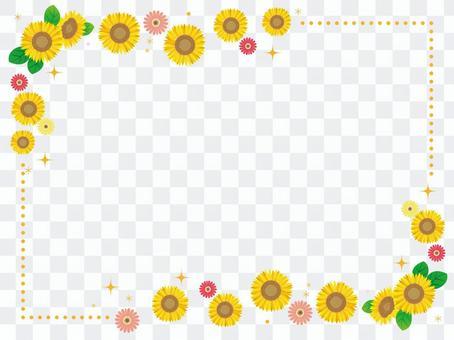 夏天框架向日葵和非洲菊2