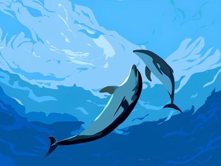 海豚在切海裡玩