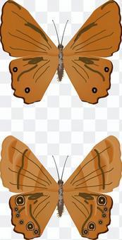 ヒカゲチョウ タテハチョウ科 昆虫