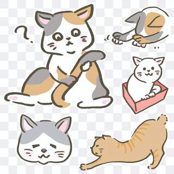 貓的塔瑪拉姿勢