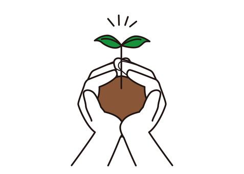 棕櫚葉生長