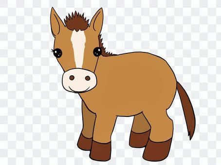 動物棕色小馬駒