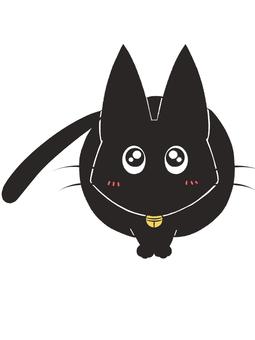 Black cat staring in anticipation