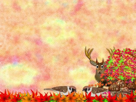秋天的公告板(2645)