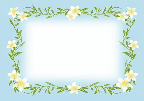 雞蛋花框架